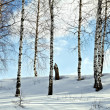 Birch trees in a winter forest — Stock Photo