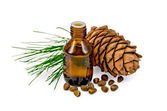 Oil with cedar cone and nuts — Stock Photo