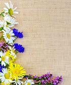 被解职的野花的框架 — 图库照片