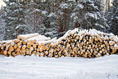 Timber on snow in winter forest — Stock Photo