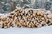 Timber on the snow in winter forest — Stock Photo