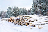 Timber on the snow in winter — Stock Photo