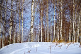 Kış manzara 1 — Stok fotoğraf
