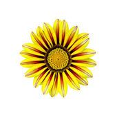 Gacaniya yellow — Stockfoto