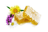 Honeycomb with flowers — Stock Photo