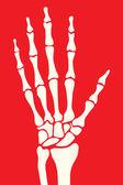 Squelette de la main — Vecteur