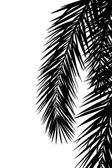 Leaf of palm tree — Vecteur