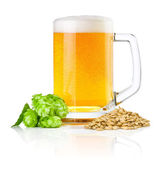 Mug fresh beer with Green hops and wheat isolated on a white bac — Stock Photo