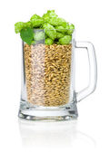 Mug for beer full of barley and hops isolated on white backgroun — Stock Photo