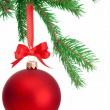图库照片: Christmas ball hanging on a fir tree branch Isolated on white ba