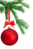 Christmas ball hanging on a fir tree branch Isolated on white ba — 图库照片
