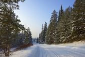 Snow-covered road next to the pine forest under a blue sky — Stock Photo