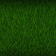 Fresh green grass background texture — Stock Photo