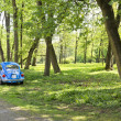 Blue car in spring park. — Stock Photo