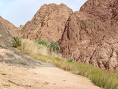 Vues de l'egypte. — Photo