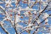 Paisagem de inverno. — Foto Stock