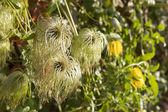 Summer garden.Green ivy. — Stock Photo