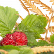 Stock Photo: Freshness. Fall wild strawberry .
