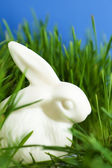 China easter bunny is in the green grass — Stock Photo