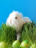 Easter bunny is in the grass — Stock Photo