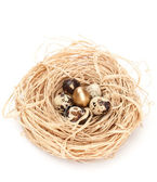 Nest with one olden and five natural quail eggs — Stock Photo