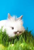 Rabbit is in the grass — Stock Photo
