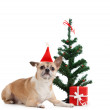 Dog near the present and Christmas tree — Stock Photo