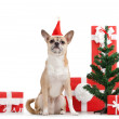 Doggy in red cap near the presents — Stock Photo