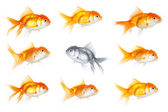 Group of goldfish — Stock Photo