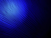Abstract blue light over lamellar fungus surface, science. — Stock Photo