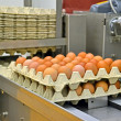 Yellow eggs in cardboard container, industrial processing. - Stock Photo