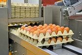 段ボール コンテナー、産業で黄色い卵処理. — ストック写真