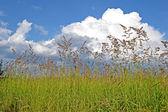 Weide gras diversiteit, onweer blauwe hemel, zomer aard. — Stockfoto