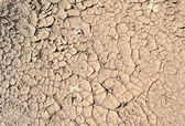 Drought, grunge dry ground, stress environment. — Stock Photo