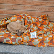 Постер, плакат: Dog sleeps under coverlet on Euro maidan meeting in Kiev Ukraine