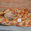 Stock Photo: Dog sleeps under coverlet on Euro maidmeeting in Kiev, Ukraine.