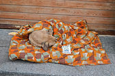 Dog sleeps under coverlet on Euro maidan meeting in Kiev, Ukraine. — Stock Photo