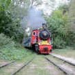 Vintage locomotive in the forest. — Stock Video #43323249