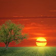 Lone Tree and the sun - Stock Photo