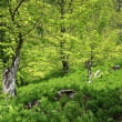 Landscape in shades of green - Stock Photo