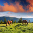 Stock Photo: Mountain landscape with horses