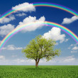 Tree in a field with a rainbow — Stock Photo