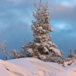 Tree and snowdrift — Stock Photo