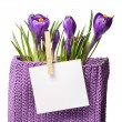 Crocuses with sheet for notes — Stock Photo