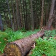 Cut off the tree in the forest — Stockfoto