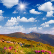 Stock Photo: Flowering shrubs in mountains