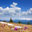 First flowers of spring in the mountains — Stock Photo #22808830
