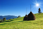 Haystacks on grass — Stock Photo