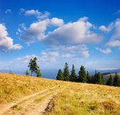 Sunny landscape — Stock Photo