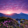 Pink flowers in the mountains — Stock Photo